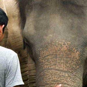 Maew Suriya The Founder of Samui Elephant Haven with Elephant