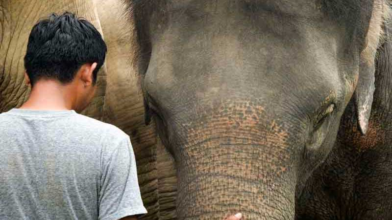 Maew Suriya The Founder of Samui Elephant Haven with Elephant