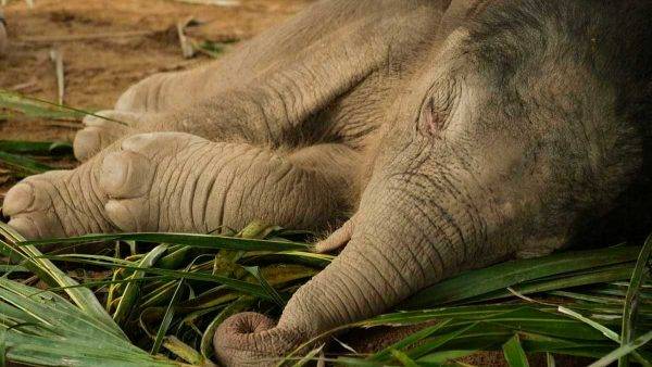 Our Baby Elephant Boy Has Been Named Haven