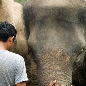 Samui Elephant Haven Founder Maew Suriya with Rescued Elephants