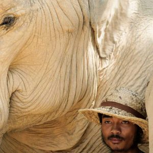 Interesting Elephant Facts 5
