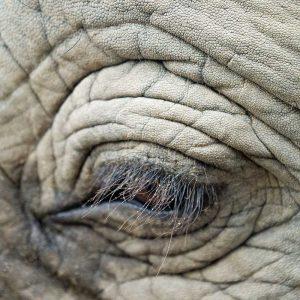 Interesting Elephant Facts 1