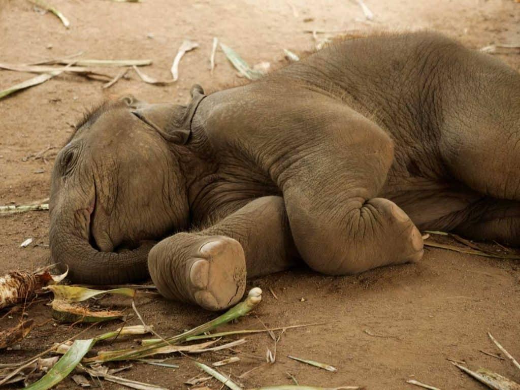 THE DAINTY FEET OF AN ELEPHANT 3