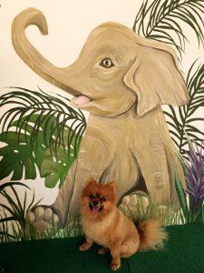 INSTAGRAM MURAL AT SAMUI ELEPHANT HAVEN 4