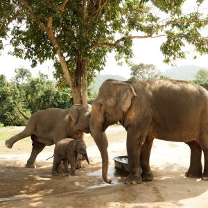 Adopt An Elephant 3