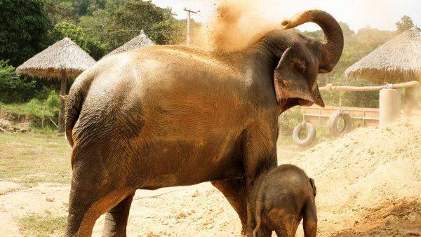 Samui Elephant Haven Support