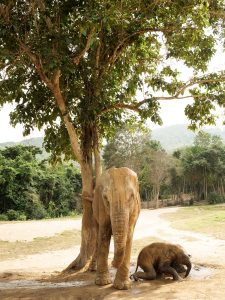 CAN YOU HELP US FEED OUR ELEPHANTS DURING THIS GLOBAL CRISIS? 4