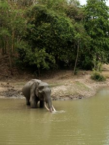 CAN YOU HELP US FEED OUR ELEPHANTS DURING THIS GLOBAL CRISIS? 2