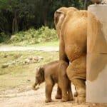 Elephant Jungle Gym 2