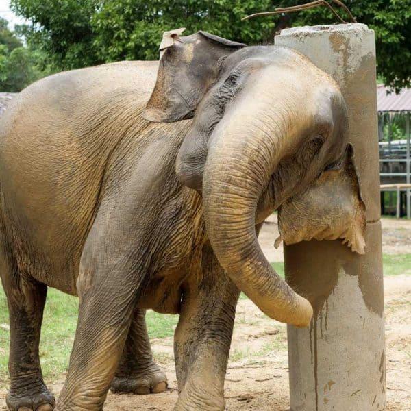 Samui Elephant Haven Support Jungle Gym