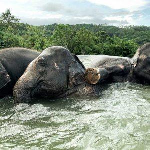 Elephant Swimming Pool 18