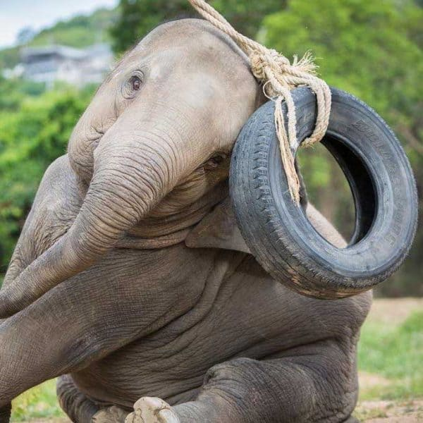 Samui Elephant Haven Support Rubber Tyres