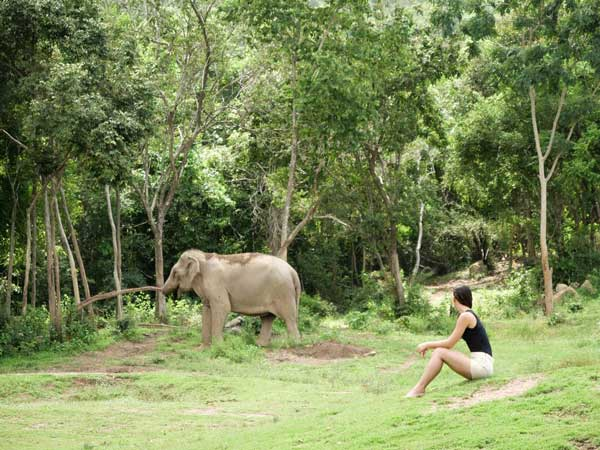 Samui Elephant Tours Volunteers Programme