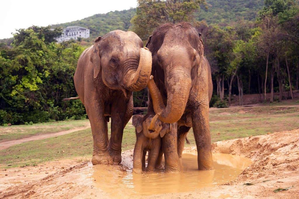 SAMUI ELEPHANT HAVEN | 2ND ANNIVERSARY 9TH AUGUST, 2020 2