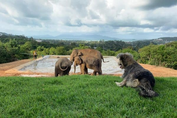 SAMUI ELEPHANT HAVEN OPENS ITS VOLUNTEERS LODGE 2