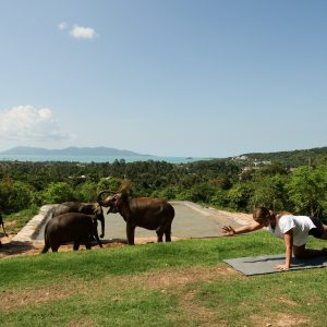 Yoga with elephants