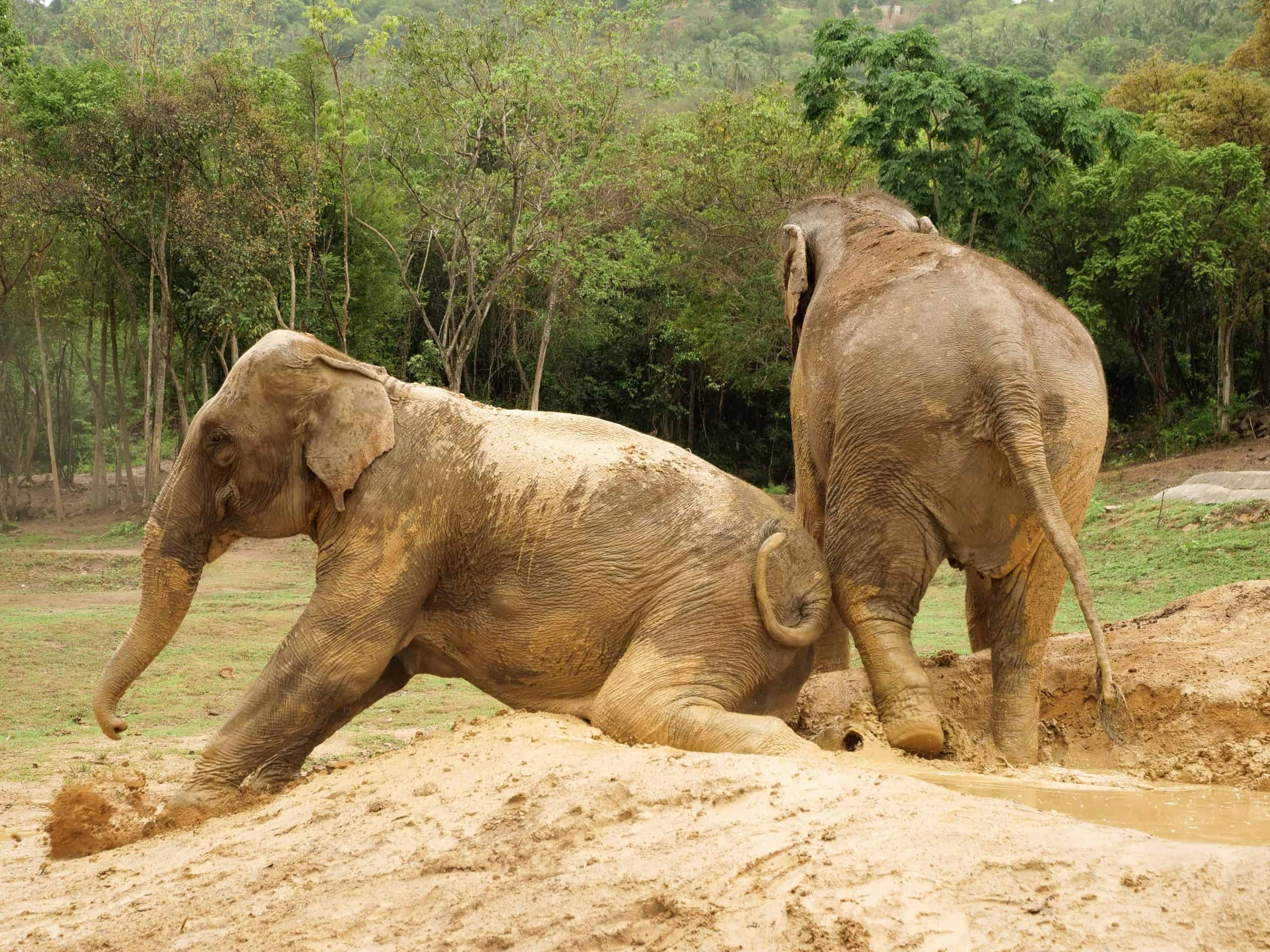 HAVEN HAS MORE WARRIORS AND COMMUNITY YOGA FOR KIDS AT SAMUI ELEPHANT HAVEN 2