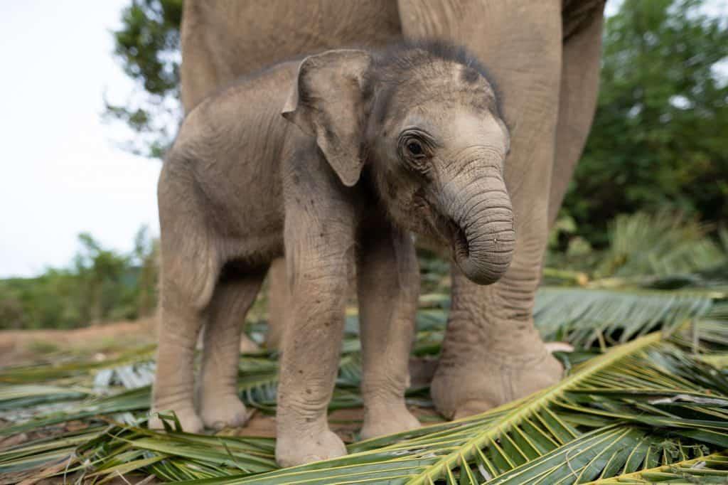 Adopt An Elephant 1