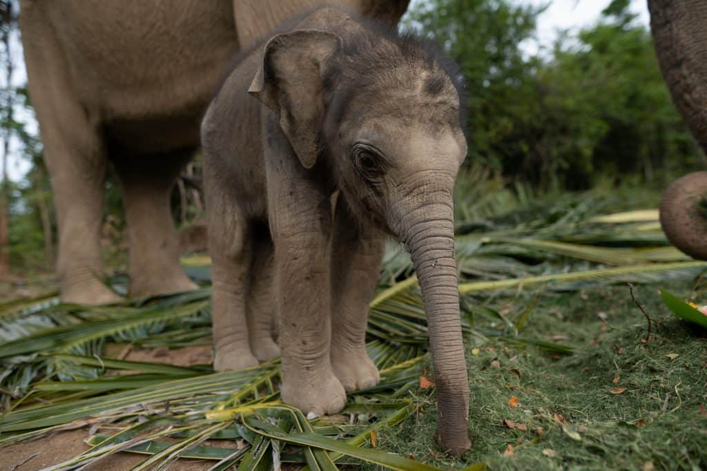 Adopt Our Baby Elephants 1
