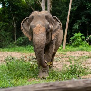 Sponsor An Elephant 10