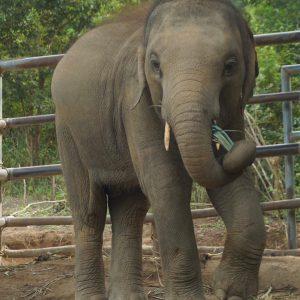 Sponsor An Elephant 9