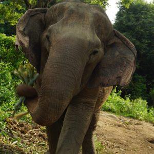 Sponsor An Elephant 12