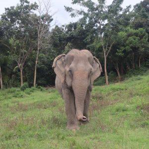 Sponsor An Elephant 13