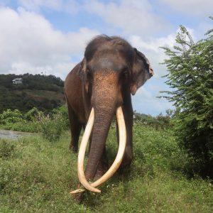 Sponsor An Elephant 4