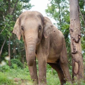 Sponsor An Elephant 8