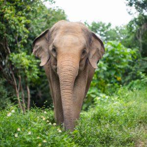 Sponsor An Elephant 7
