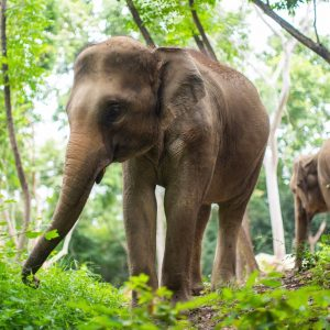 Sponsor An Elephant 6