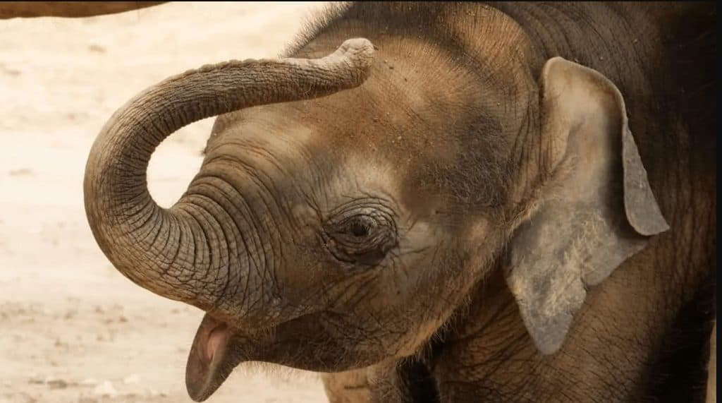 Adopt An Elephant 2