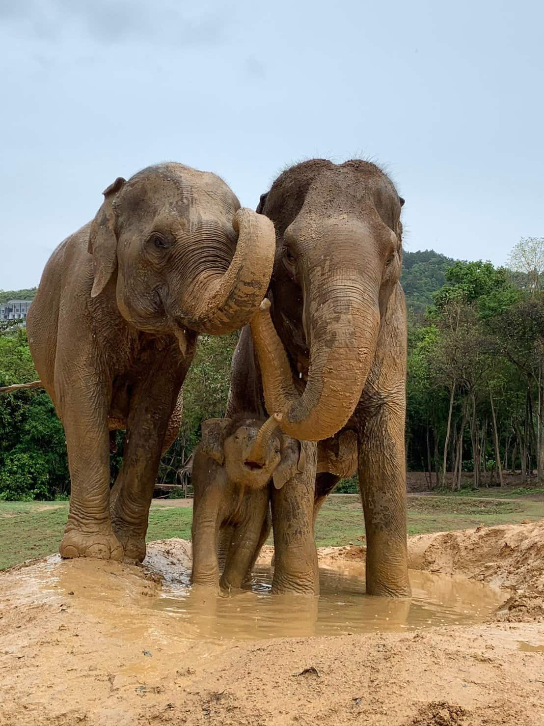 Adopt An Elephant 29