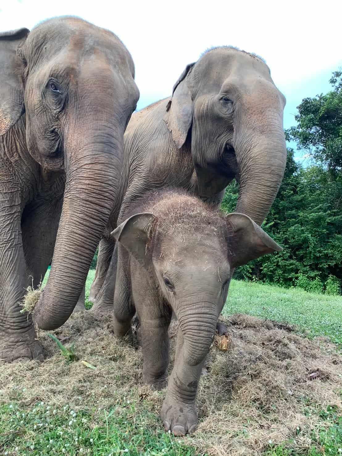 Adopt An Elephant 31
