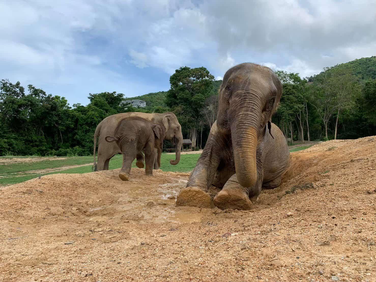 Adopt An Elephant 33