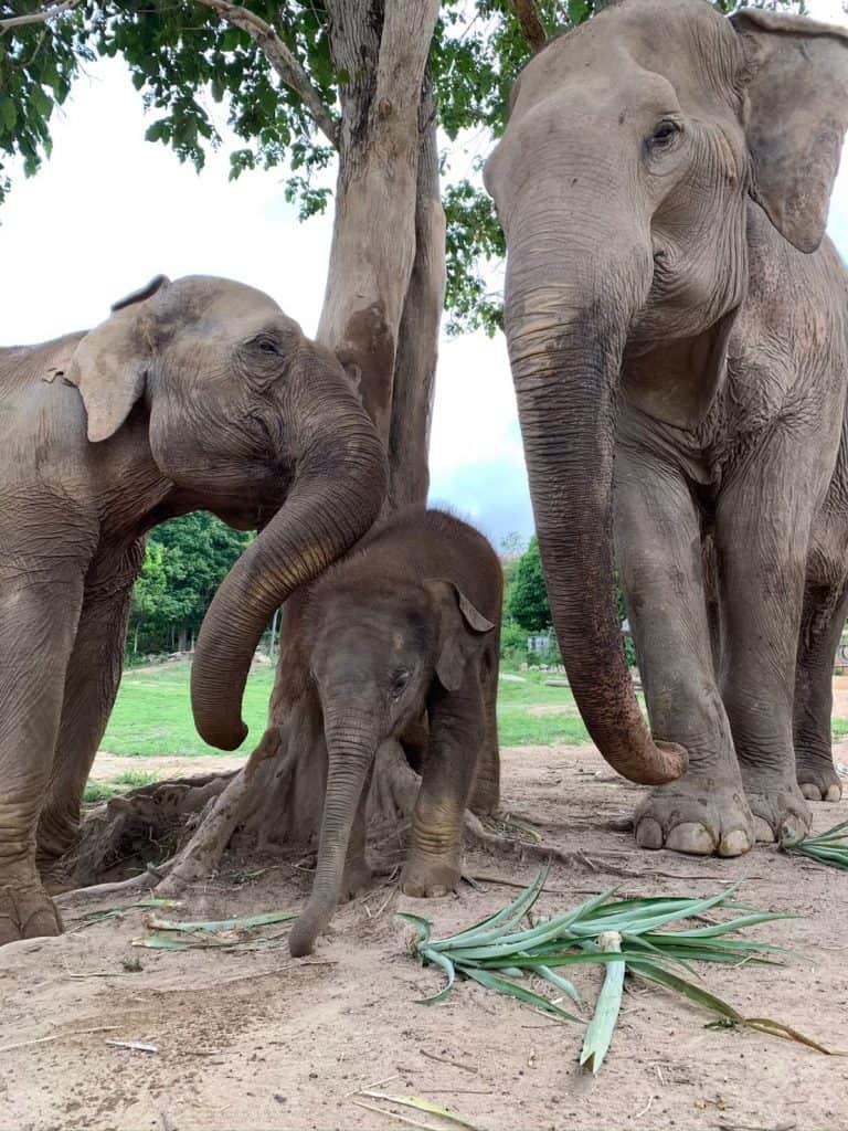 Adopt An Elephant 27