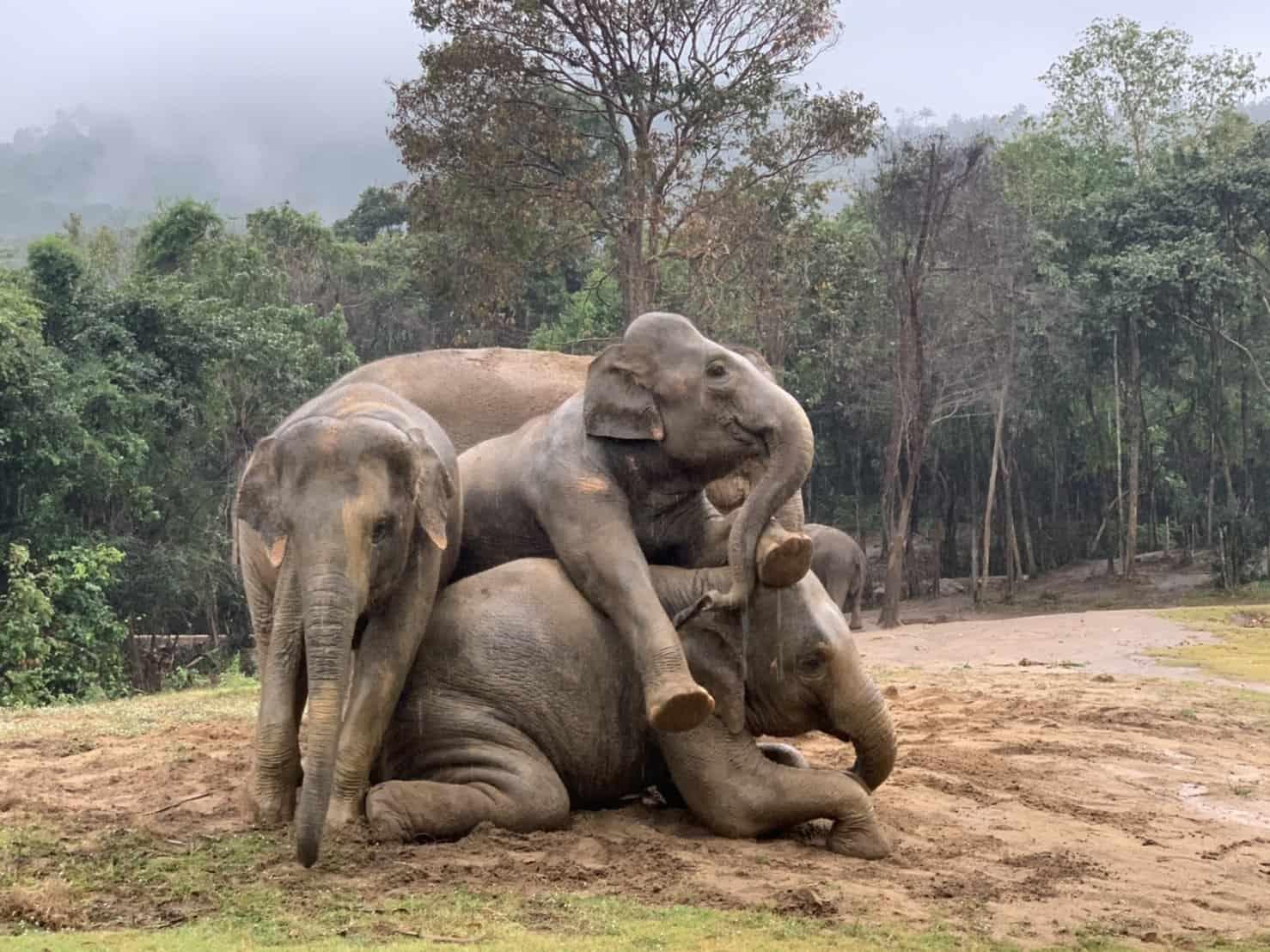 Adopt An Elephant 38