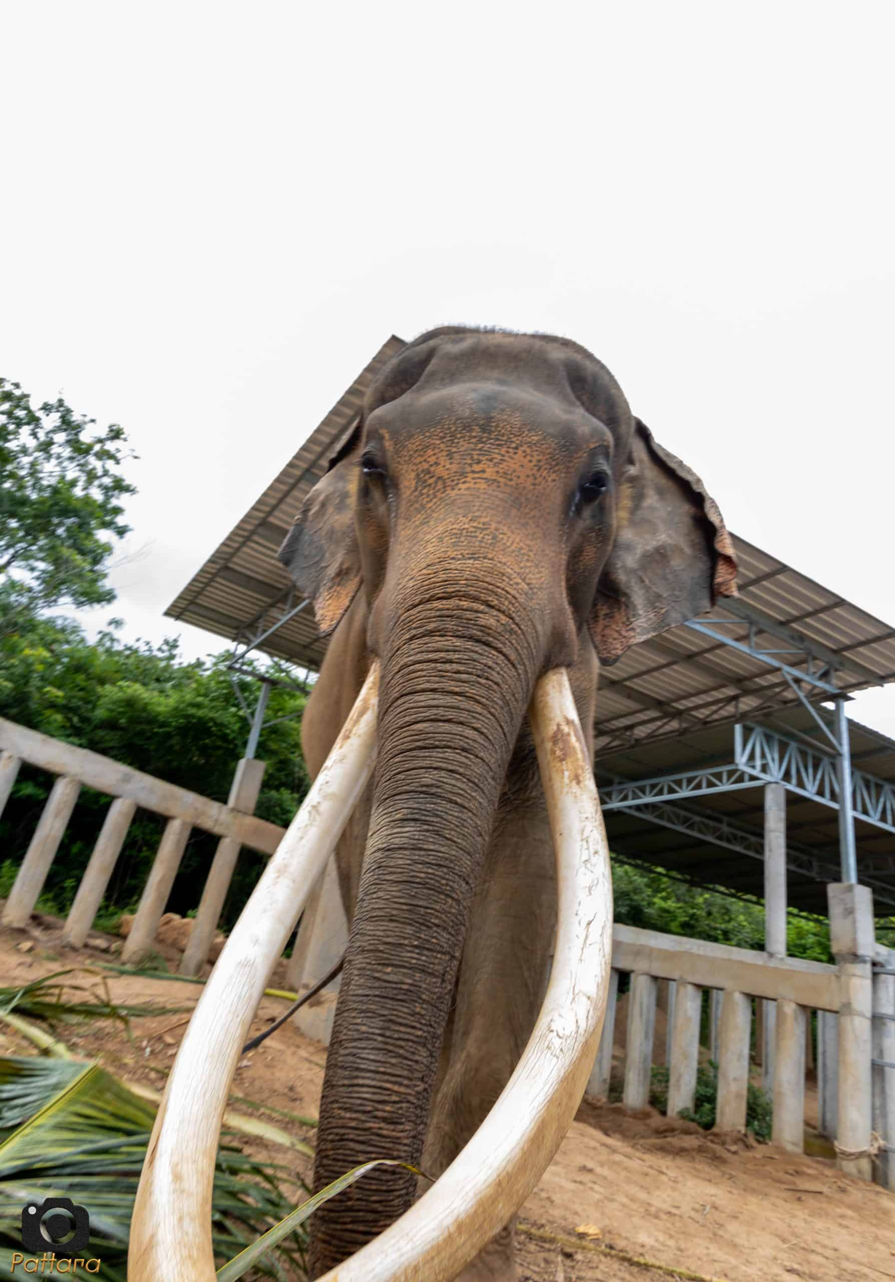 Adopt An Elephant 19