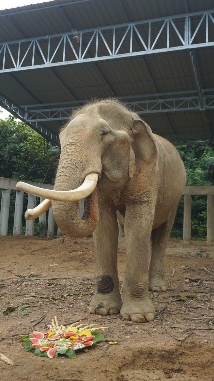 Adopt An Elephant 41