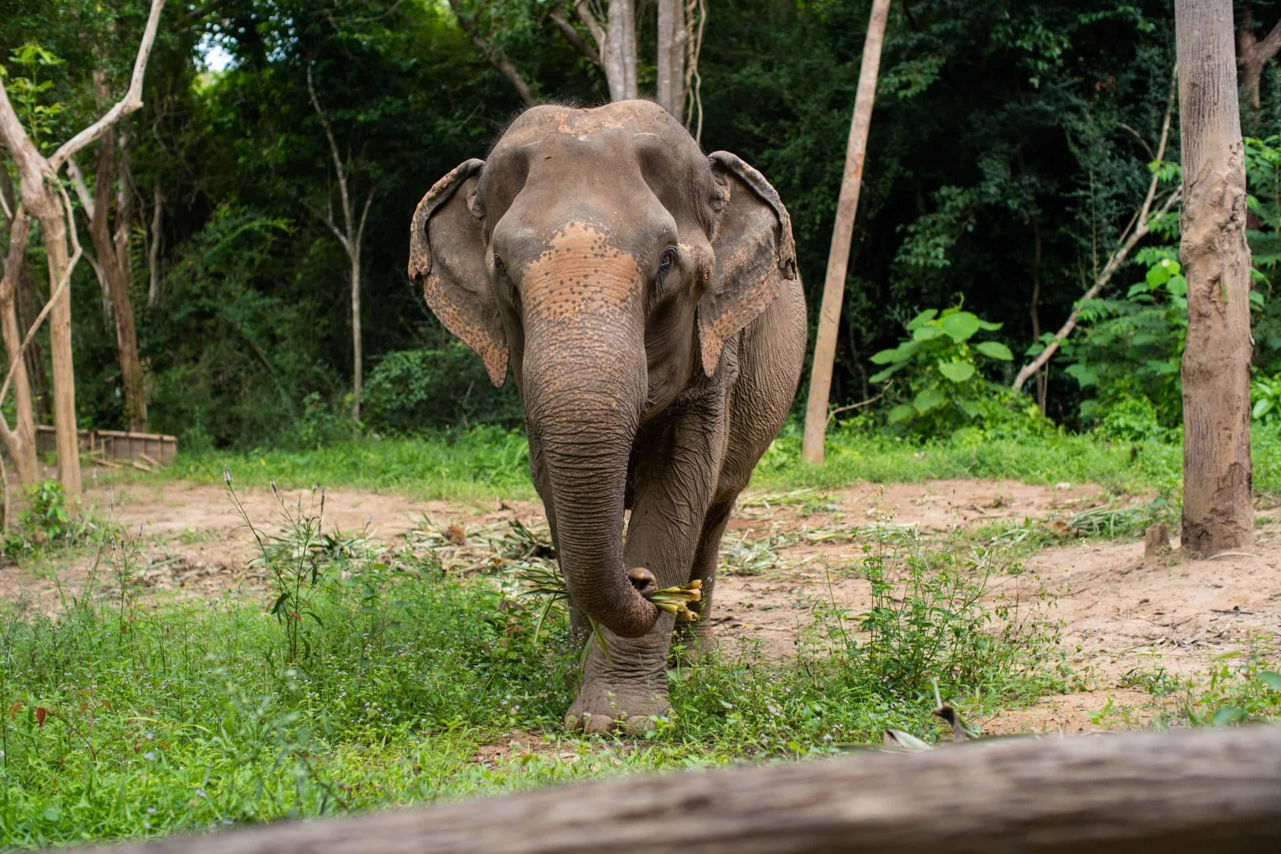 Adopt An Elephant 24