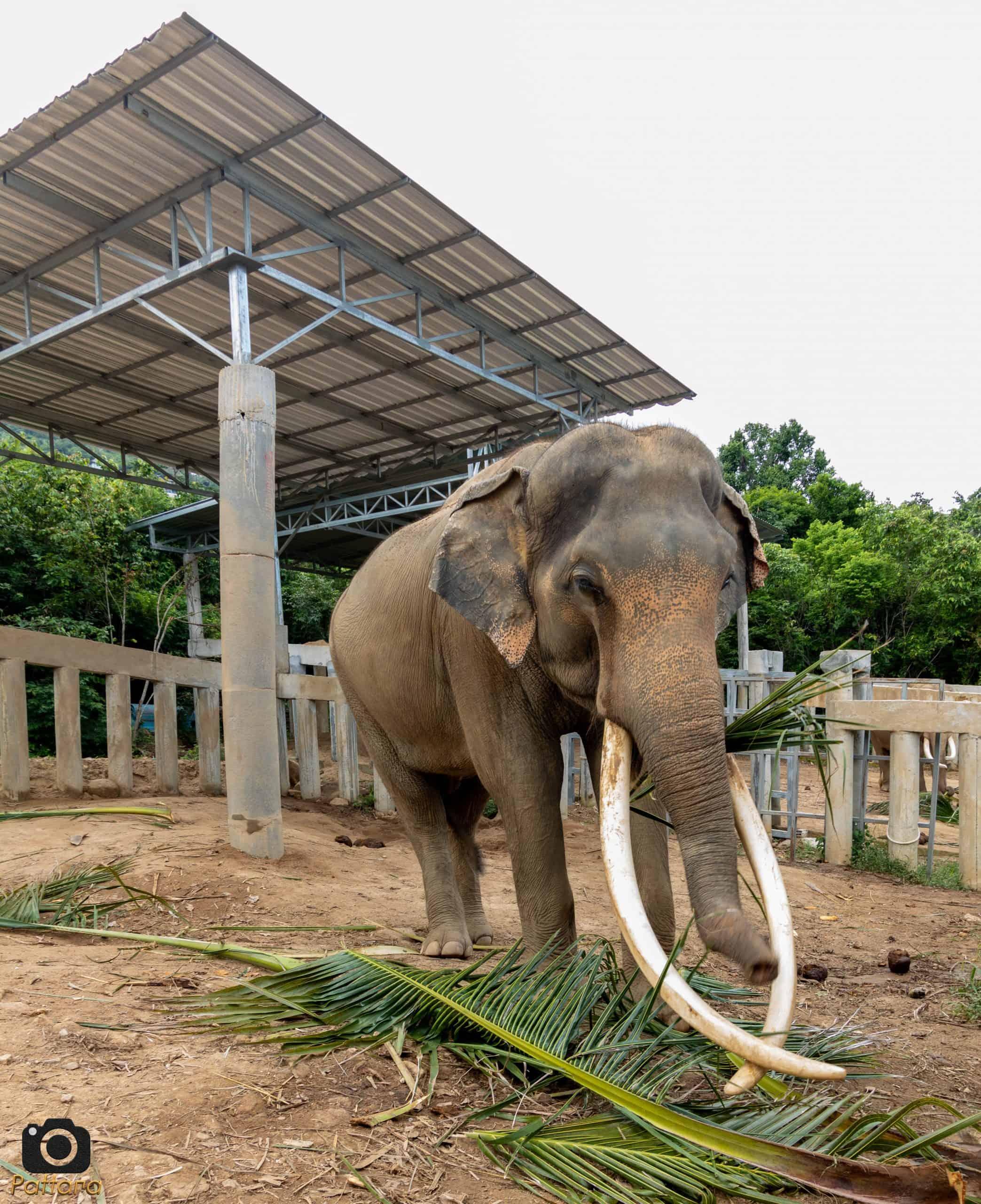 Adopt An Elephant 21
