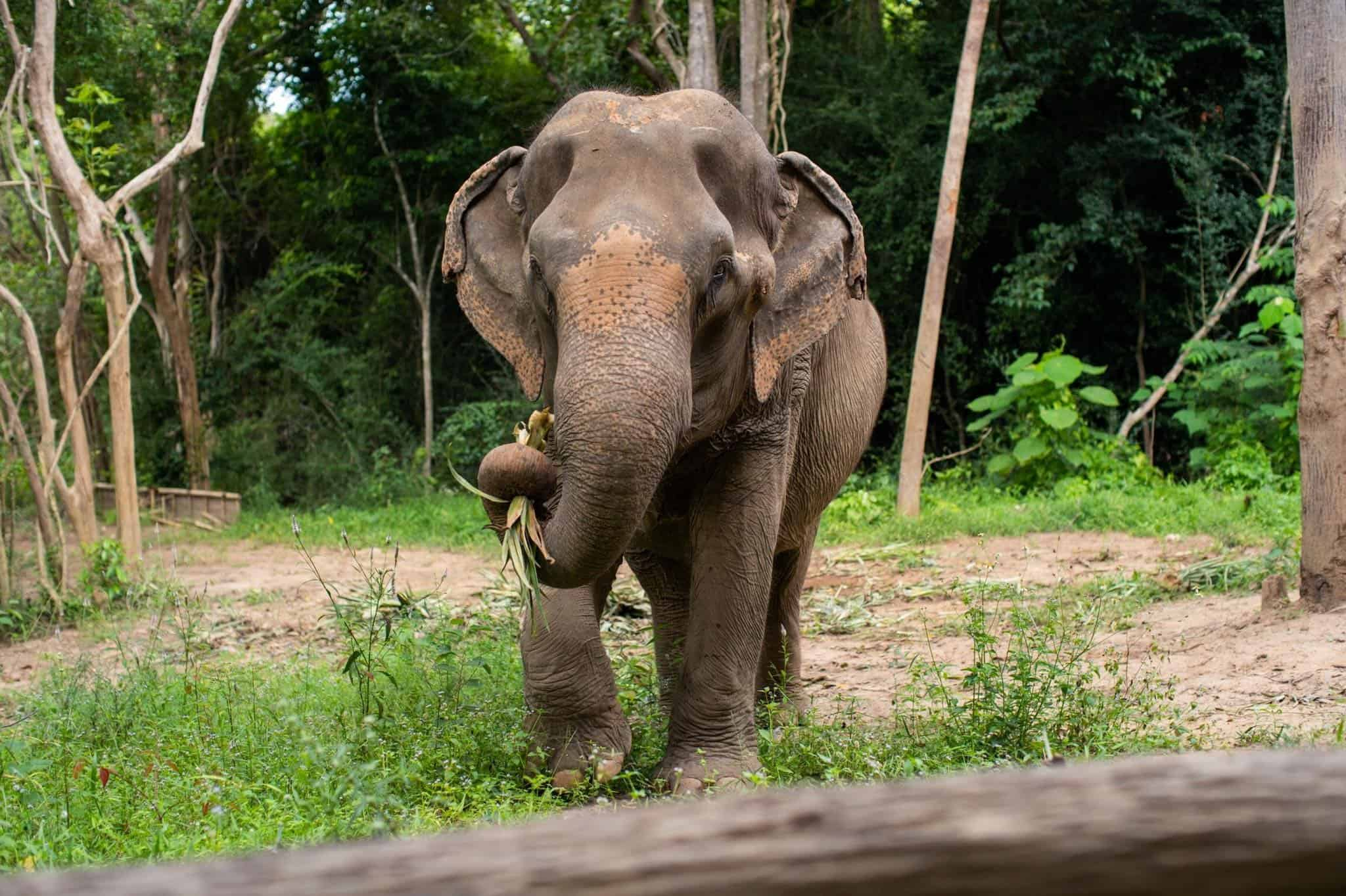 Adopt An Elephant 22