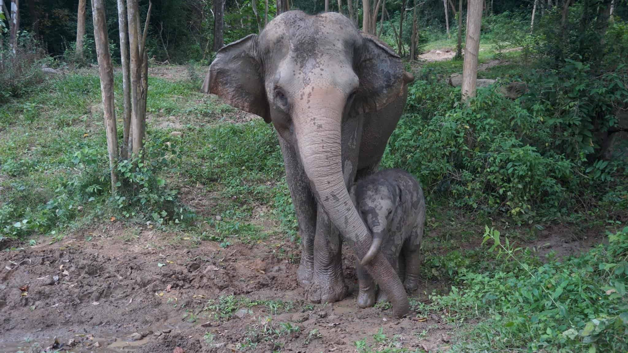 Adopt An Elephant 12