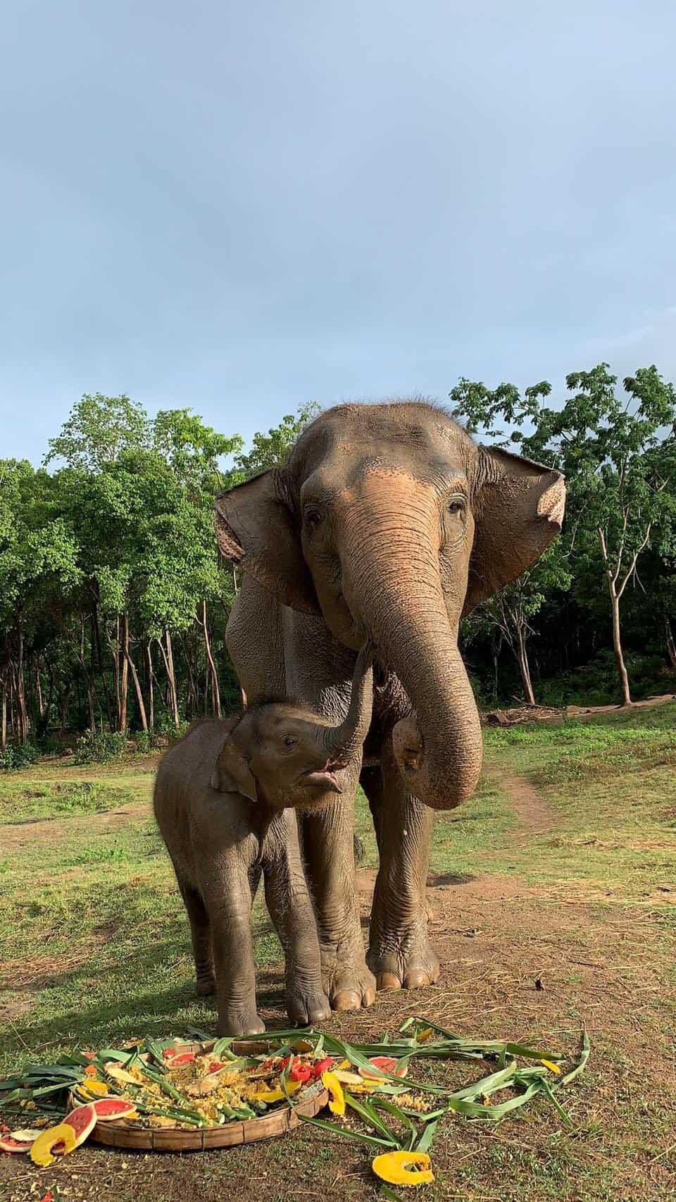 Adopt An Elephant 10